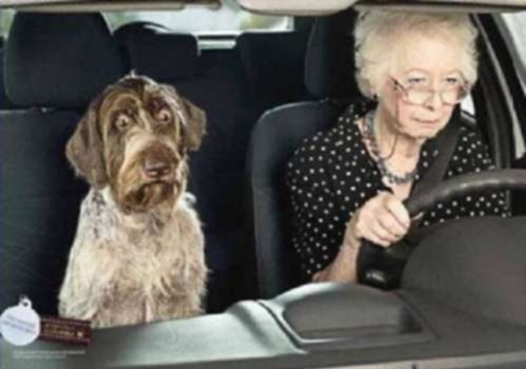 scary-drivers-500-granny-driving-dog-scared1wtmk-980x0