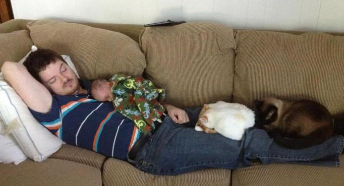 Image result for napping with cats